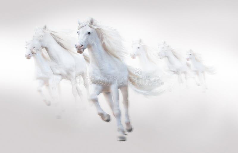 许多白马跑,隔绝在白色背景 图库摄影