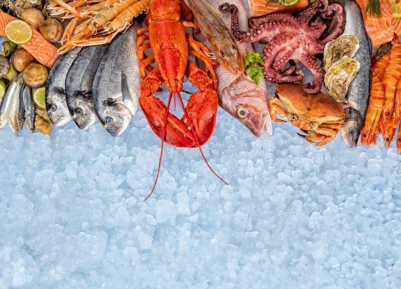许多种类海鲜,服务在被击碎的冰 免版税库存图片