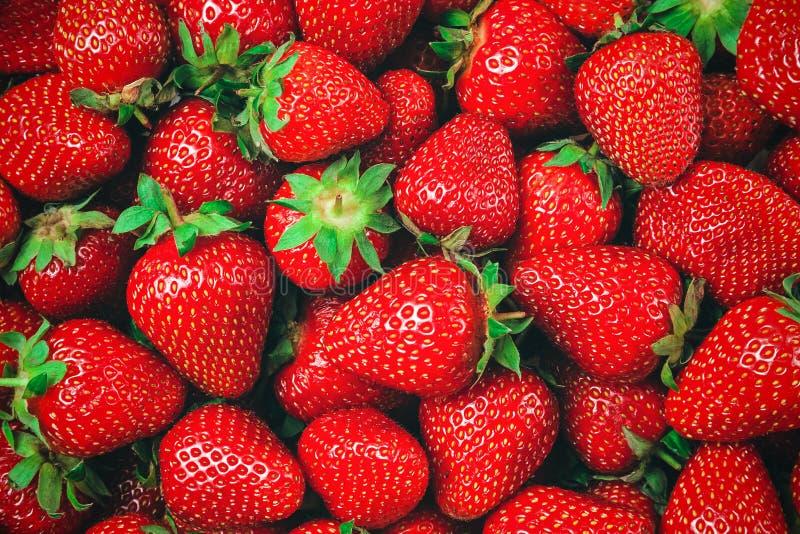 许多红色成熟草莓-背景 免版税库存照片