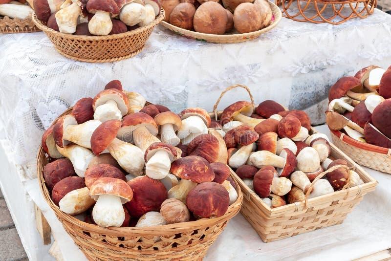 许多美丽的可食的森林蘑菇牛肝菌蕈类可食f 叫作国王牛肝菌、便士小圆面包和9月的pinophilus在柳条筐放置了 免版税图库摄影