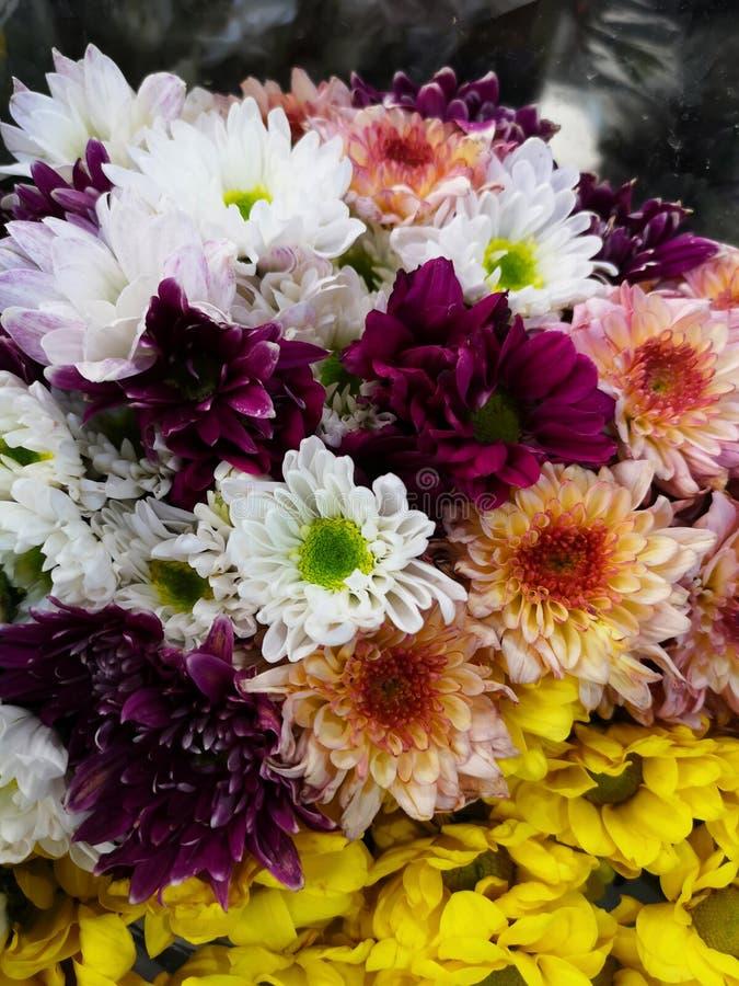 许多美好的菊花颜色在市场上 免版税库存照片