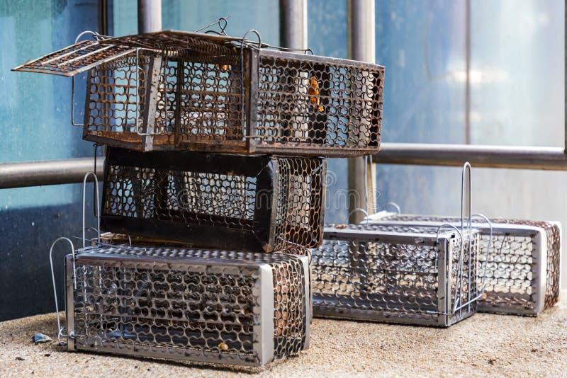 许多老鼠陷井笼子汇集老,并且新准备使用 免版税库存照片
