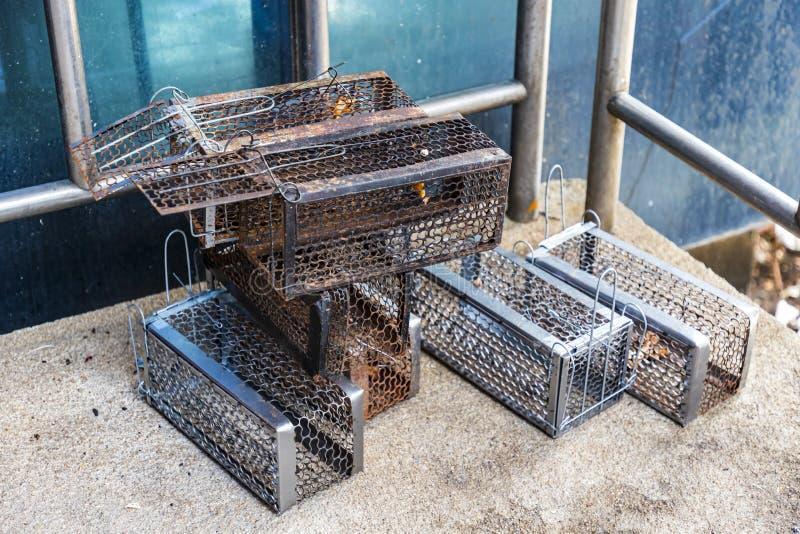 许多老鼠陷井笼子汇集老,并且新准备使用 库存图片