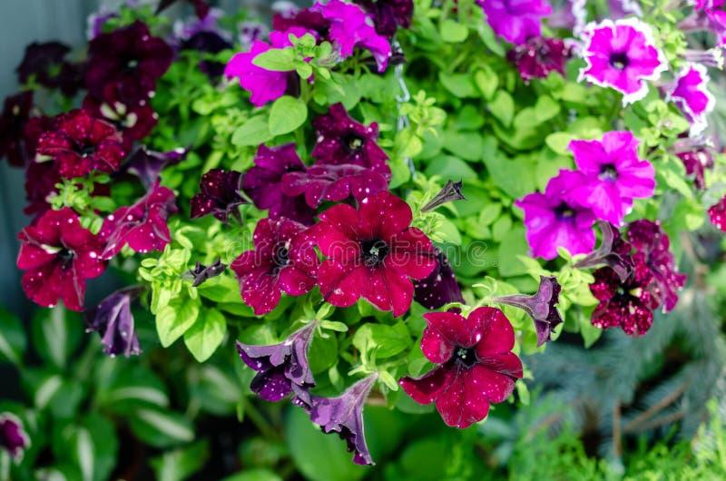 许多花不同颜色在夏天 免版税库存照片