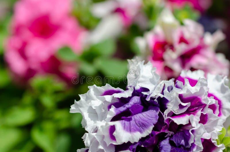 许多花不同颜色在夏天 库存图片