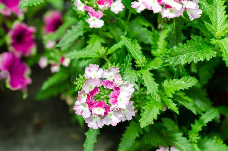 许多花不同颜色在夏天 免版税图库摄影