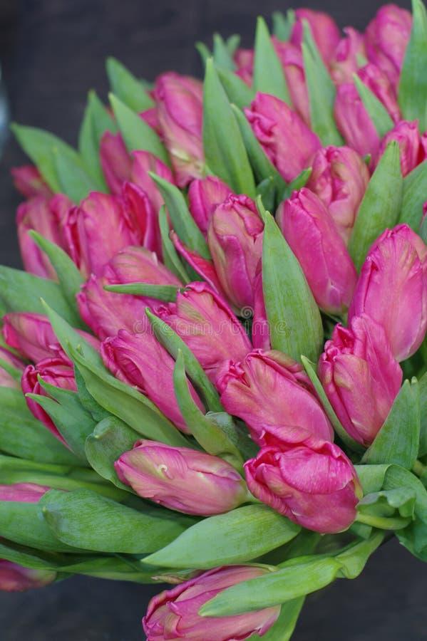 许多花玫瑰色郁金香为妇女` s天 免版税库存照片