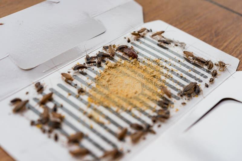 许多蟑螂由贴纸或俘获器捉住了 库存照片