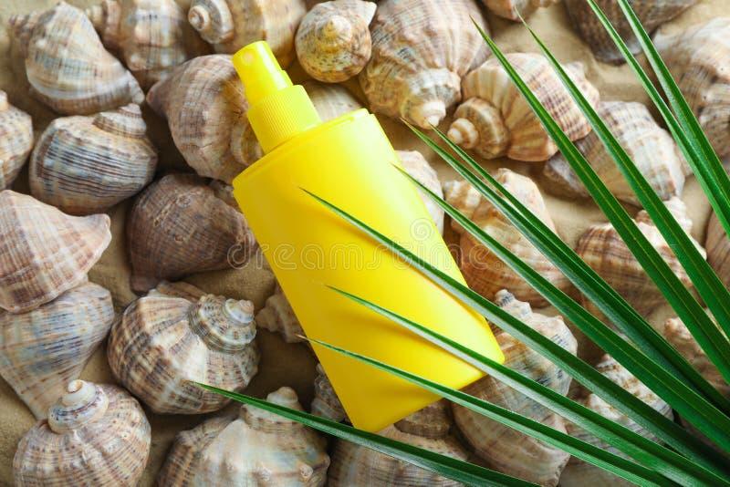 许多贝壳、遮光剂和棕榈叶在海沙,空间文本的和特写镜头 ?? 库存图片