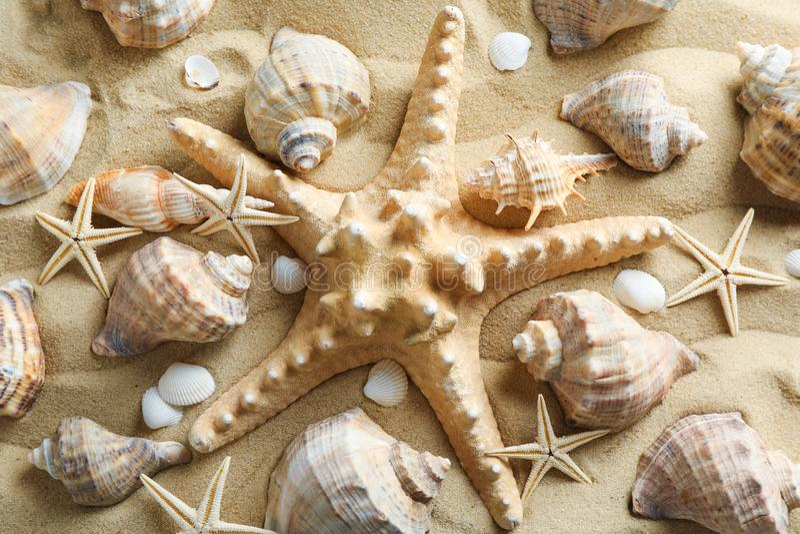 许多贝壳和海星在海沙,特写镜头 ?? 库存图片