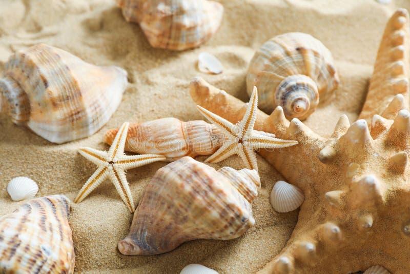 许多贝壳和海星在海沙,特写镜头 ?? 图库摄影