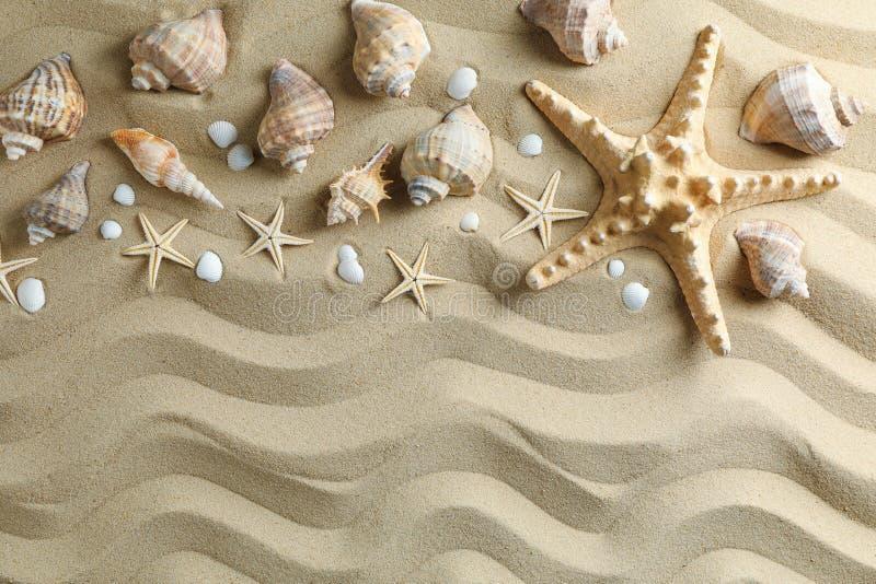 许多贝壳和海星在海沙,空间文本的和顶视图 ?? 库存图片