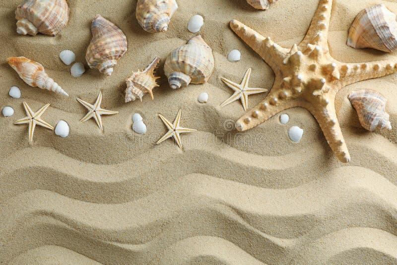 许多贝壳和海星在海沙,空间文本的和顶视图 ?? 免版税库存照片