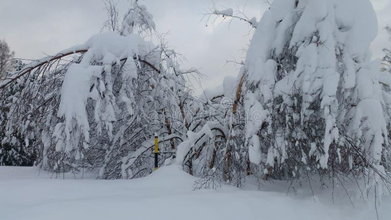 许多雪 库存图片