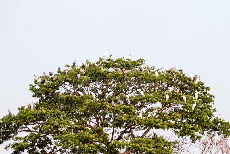 许多鸟在树在日落 免版税库存图片
