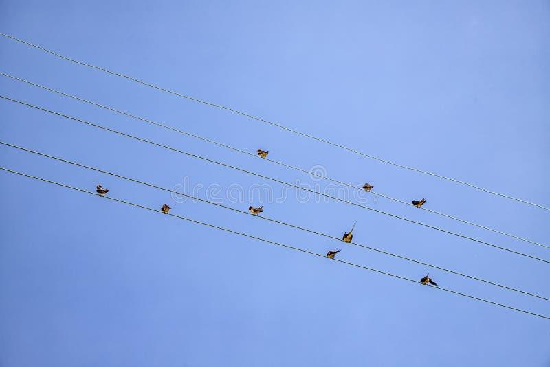 许多鸟坐输电线缆绳 免版税库存图片