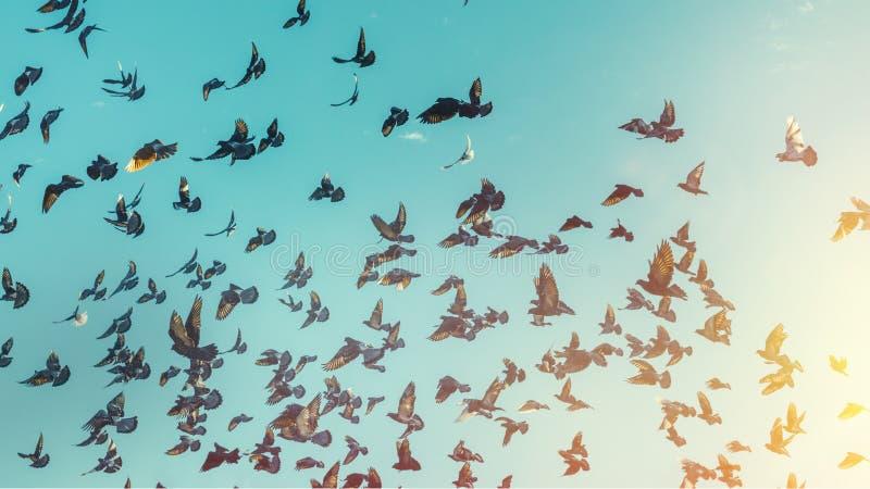 许多鸽子在蓝天飞行 自由目的地旅行概念 免版税库存图片
