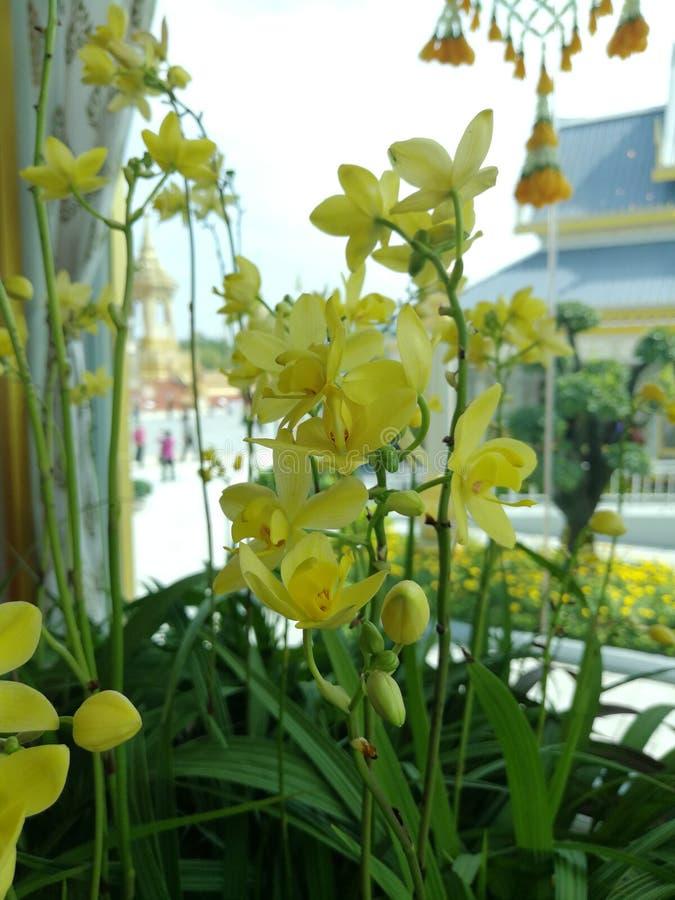 许多黄色兰花是花束 免版税库存图片