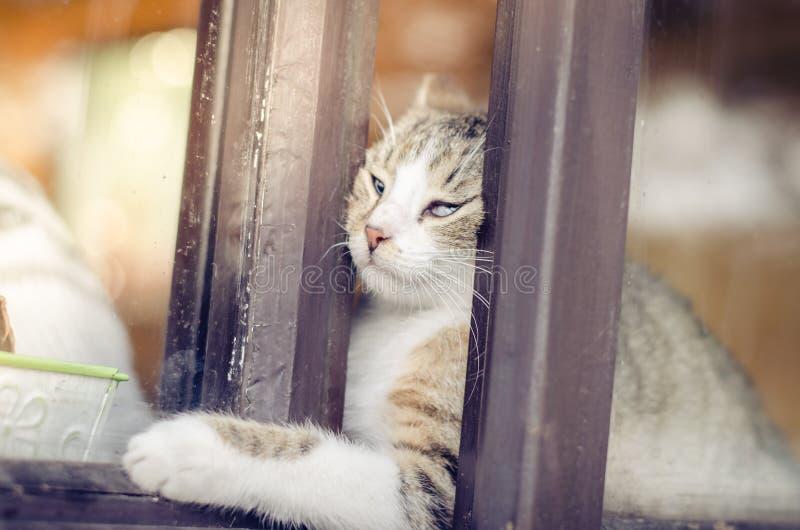 设法的猫逃脱 免版税库存照片