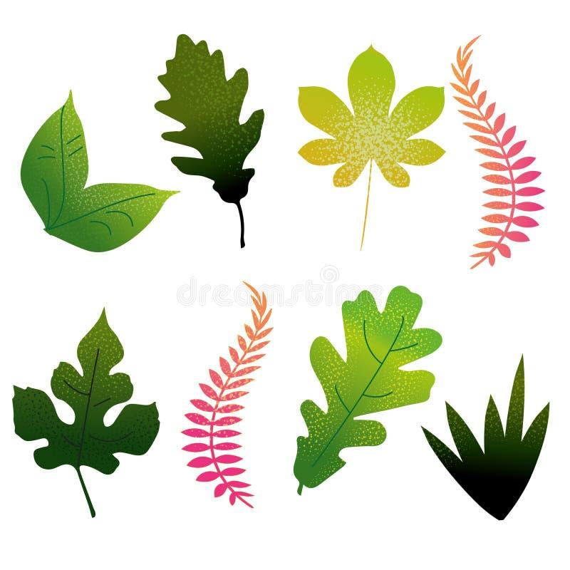 设置不同的绿色和桃红色叶子 库存图片