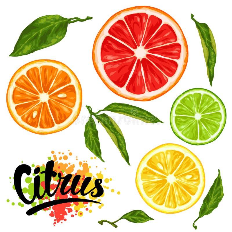 设置与柑橘水果切片 柠檬石灰葡萄柚和桔子的混合 库存例证