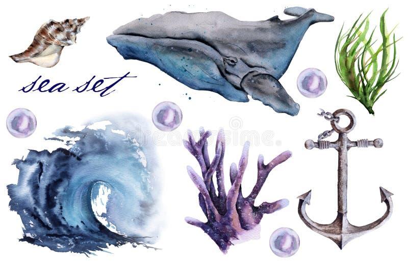 设置与海元素 鲸鱼,波浪,海藻 背景查出的白色 库存例证