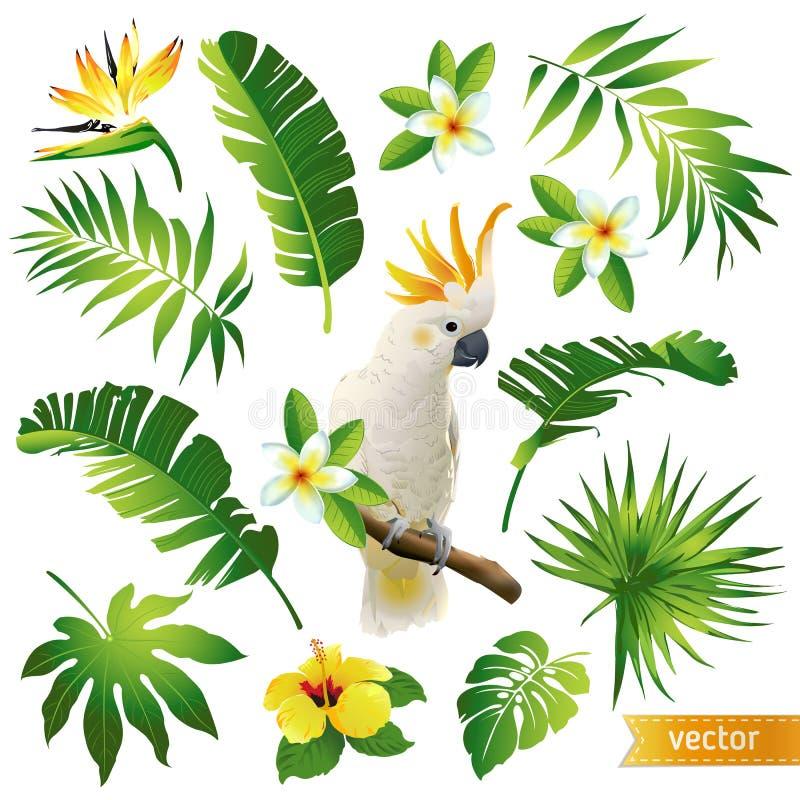 设置与热带叶子、花和鸟 皇族释放例证