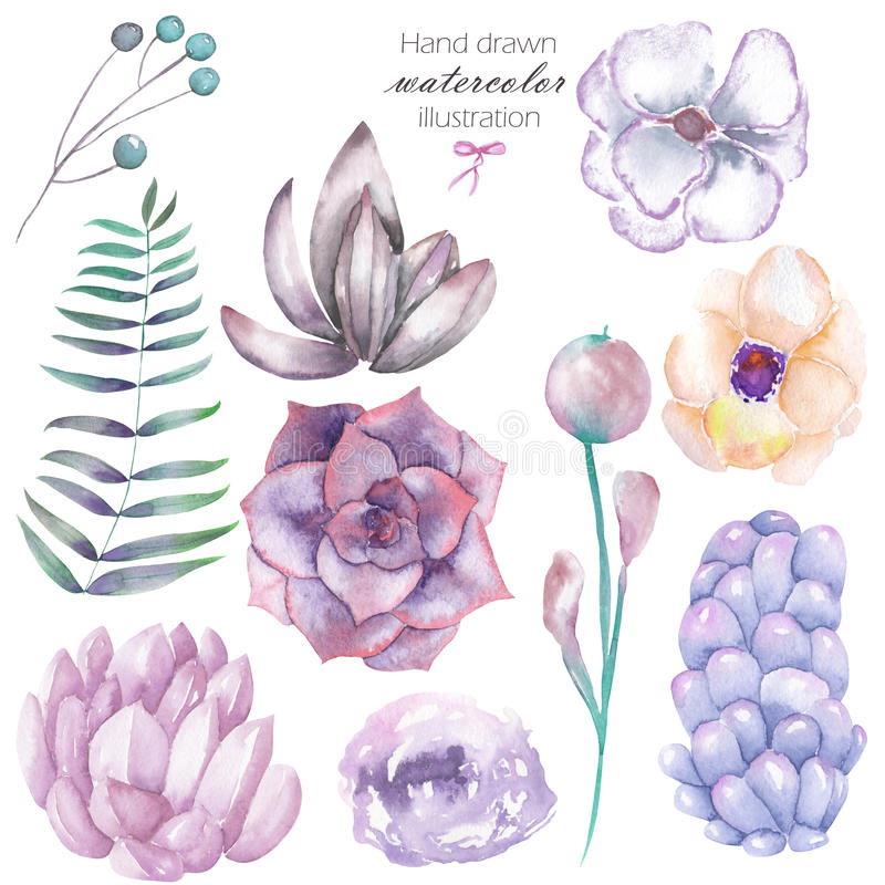 设置与被隔绝的水彩花卉元素:多汁植物,花、叶子和分支,手拉在白色背景 皇族释放例证