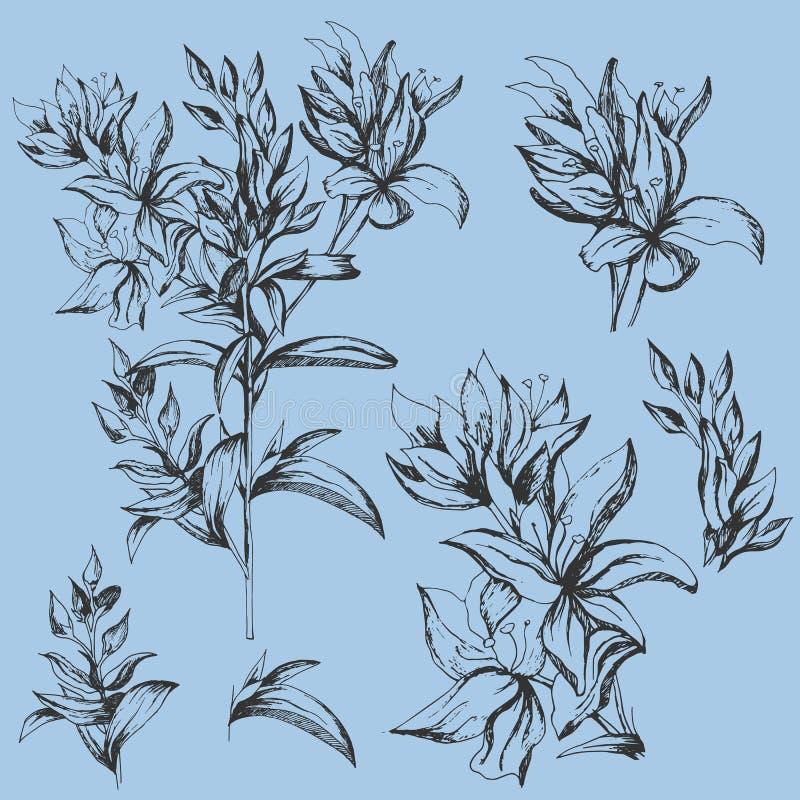 设置传染媒介在白色背景的等高花 墨水画的被隔绝的花的剪影 等高Clipart为夏天 库存例证