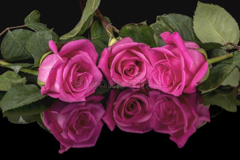设置反射性表面上的三朵桃红色玫瑰 库存图片