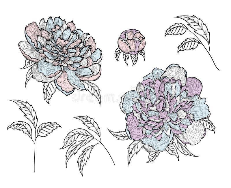 设置向量图形细部图-牡丹芽和叶子 皇族释放例证