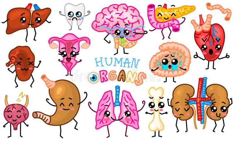 设置器官 逗人喜爱的愉快的人,微笑的字符 传染媒介别针,动画片kawaii象 健康心脏,肚腑 库存例证
