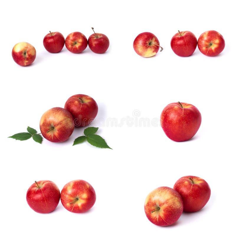 设置在白色背景的红色苹果 红色水多的苹果与黄色斑点的在白色背景 j的构成 免版税库存图片