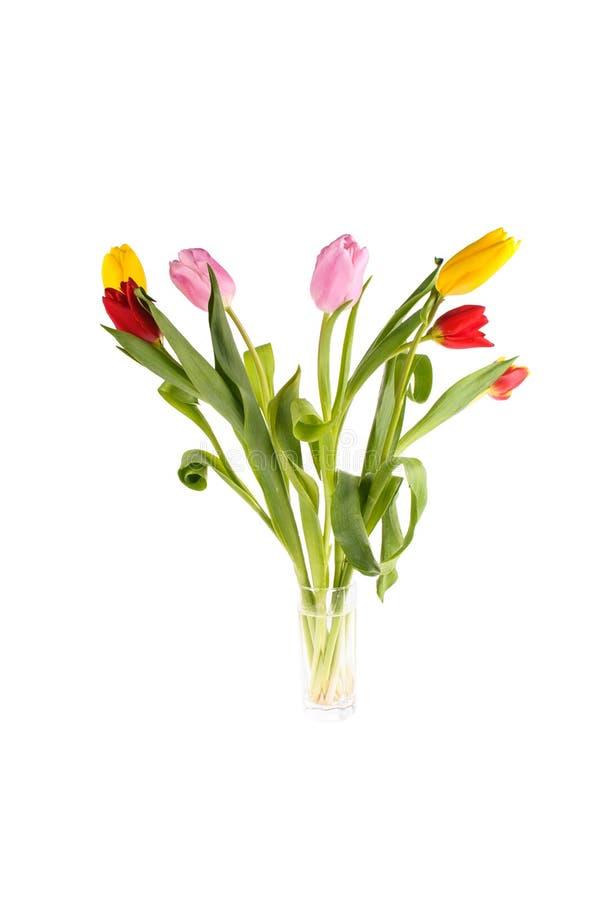 设置在白色背景隔绝的不同颜色郁金香,春季 库存图片