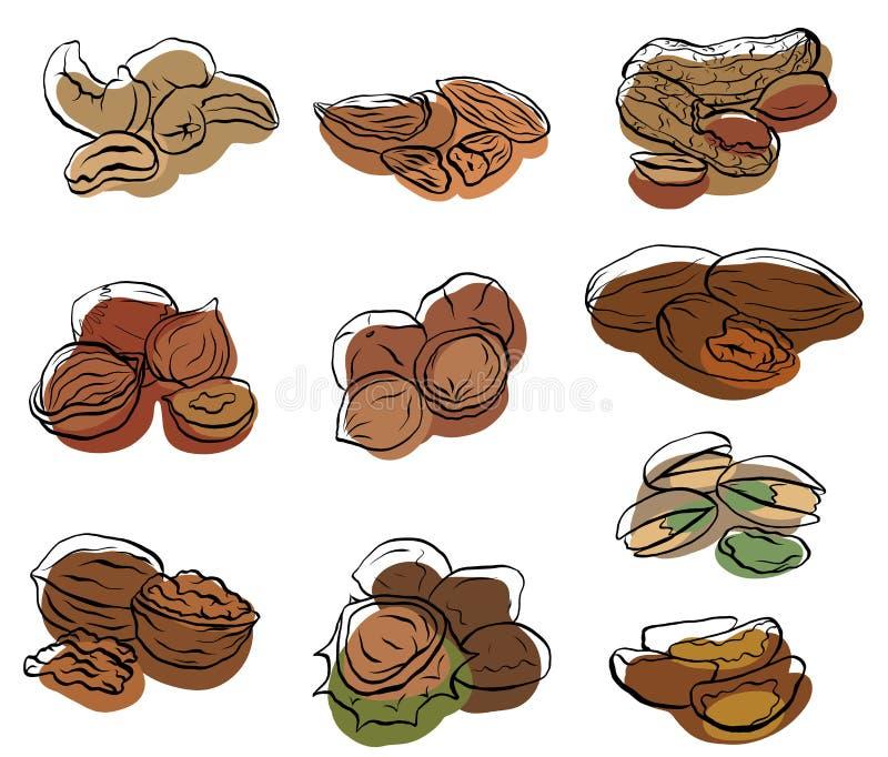 设置坚果的各种各样的类型等高图画有色的斑点的 皇族释放例证