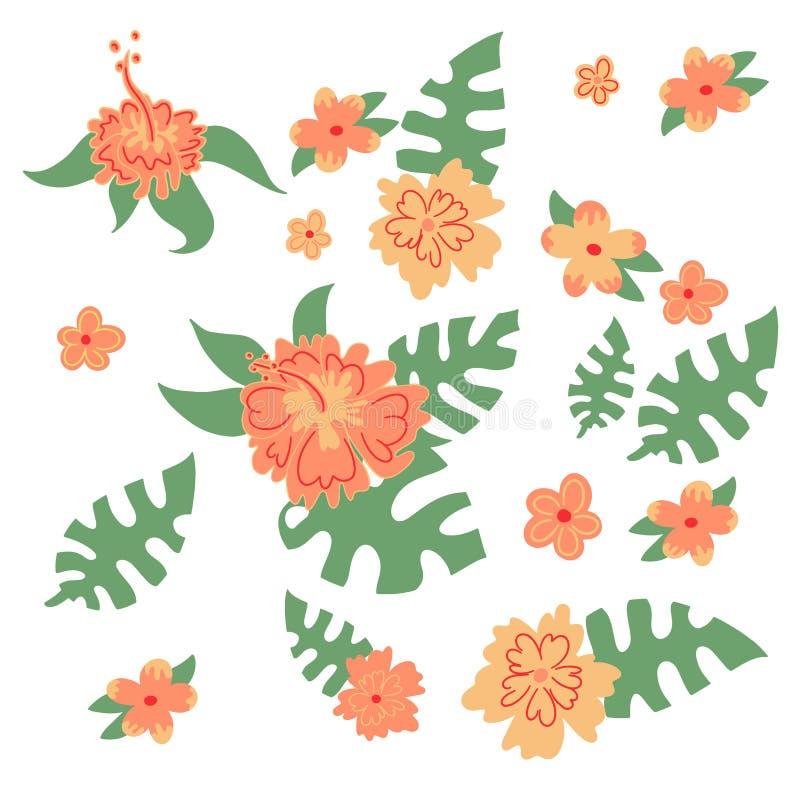 设置夏威夷花和monstera叶子自然叶子 向量例证