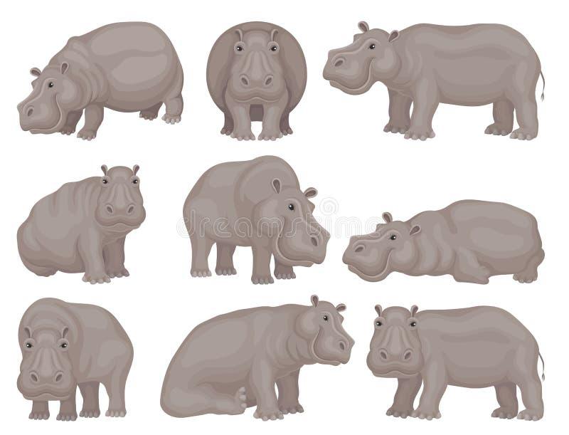 设置大灰色河马用不同的行动 非洲动物 狂放的生物 野生生物题材 平的传染媒介设计 库存例证