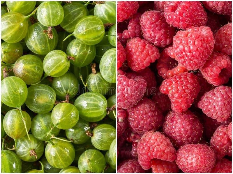 设置新鲜的莓果、莓和鹅莓 库存照片