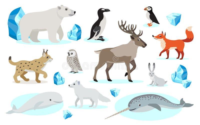 设置极性动物象,隔绝在白色背景 库存例证