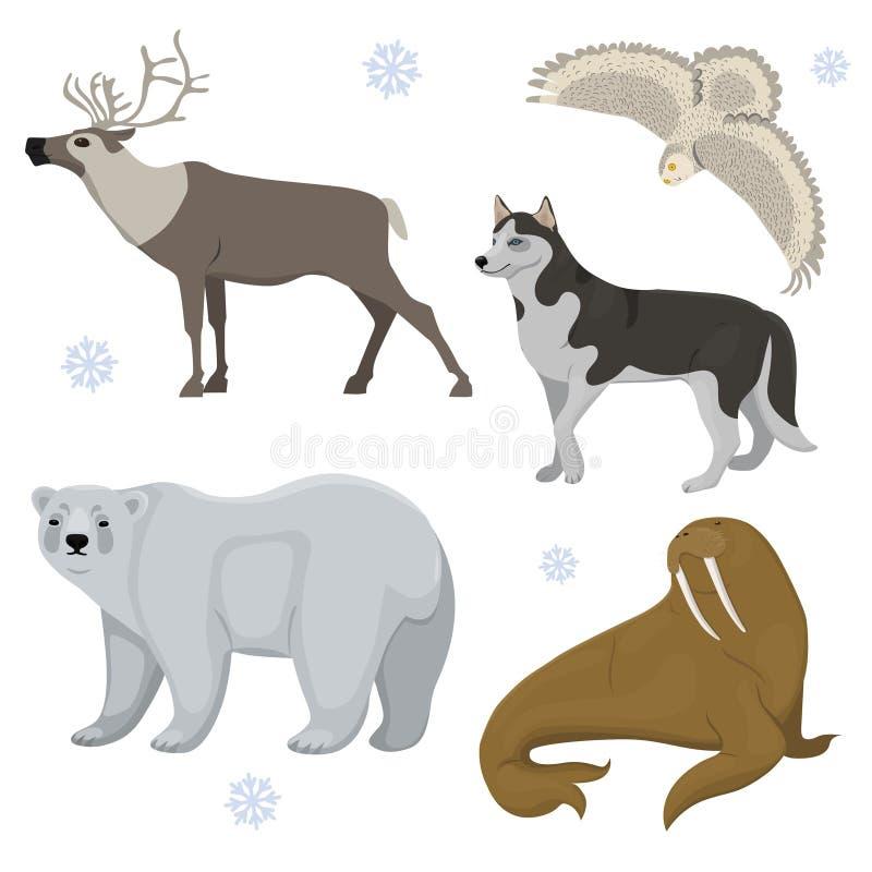 设置极性动物 爱斯基摩,熊,猫头鹰,鹿,海象 传染媒介在白色背景隔绝的剪贴美术 库存例证
