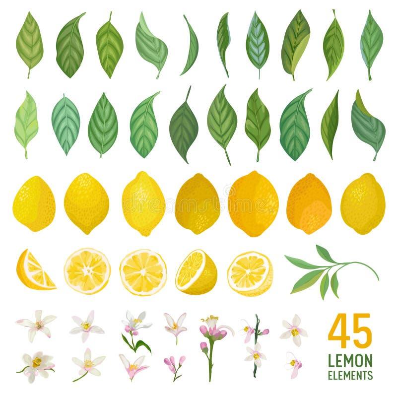 设置柠檬、叶子和花的水彩元素海报的,夏天充满活力的横幅,封面设计模板,社会媒介 皇族释放例证