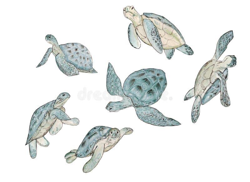 设置水彩在白色背景的海龟 夏天异乎寻常的印刷品 库存例证