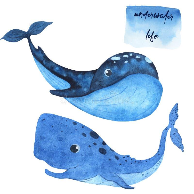 设置水彩海洋哺乳动物鲸鱼和抹香鲸 向量例证