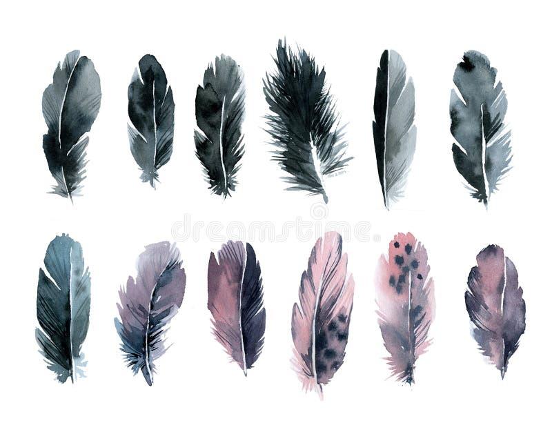 设置水彩羽毛黑和桃红色 皇族释放例证