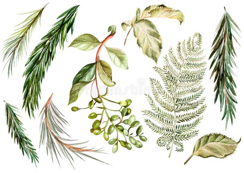设置水彩 狂放的森林叶子 皇族释放例证