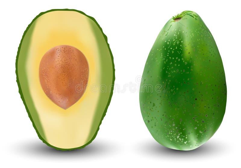 设置现实绿色鲕梨 也corel凹道例证向量 异乎寻常的常青果类植物 背景位隔离白色 库存例证
