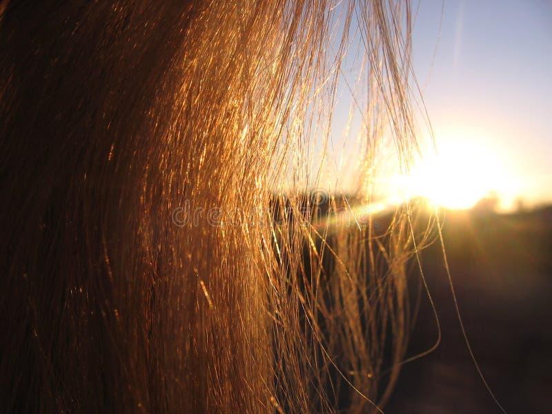 设置的平衡的太阳通过金黄光芒通过头发发光的妇女头发发光 免版税库存图片