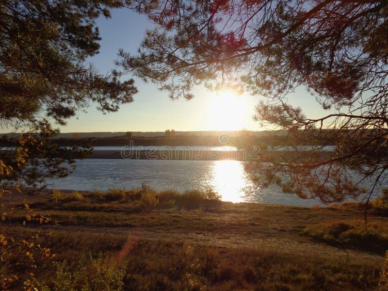 设置的秋天太阳的光芒的杉木森林在河岸的 库存照片