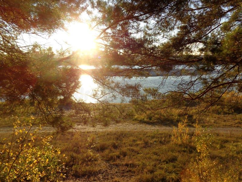 设置的秋天太阳的光芒的杉木森林在河岸的 图库摄影