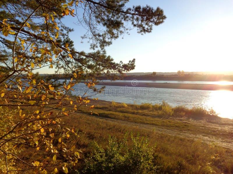 设置的秋天太阳的光芒的杉木森林在河岸的 免版税图库摄影